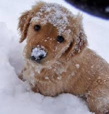 Cute Puppy Pictures- screenshot