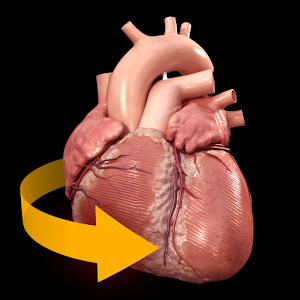 Heart 3D Anatomy for Android
