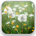 Dandelion Field Live Wallpaper icon