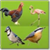 BirdEncyclopedia