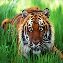 3D cool tiger 28 logo
