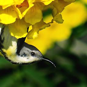 knok knok !!! Yes? by Chhaditya Parikh - Animals Birds ( birds flower )