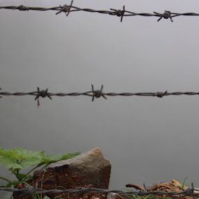 chained nature by Raj Tandukar - Nature Up Close Other Natural Objects