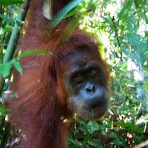 Primates of Java