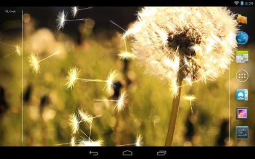 玩個人化App|Dandelion Live Wallpaper ★免費|APP試玩