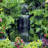 Waterfall In Garden Live Wallp