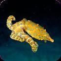 Underwater World Wallpapers icon
