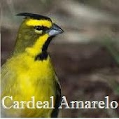 Songs of birds from Brazil PRÓ