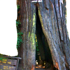 Rons Heritage Redwood Park icon