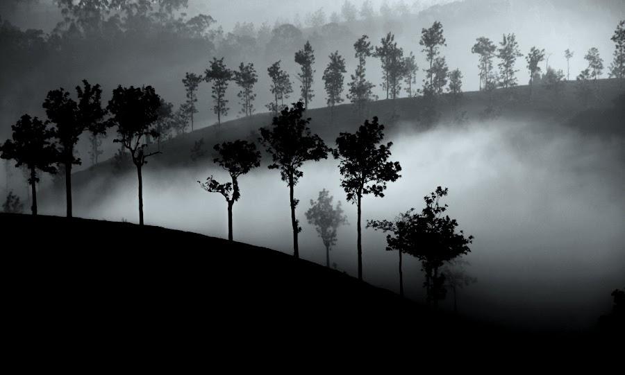 In the fog by Milan Petek Levokov - Landscapes Mountains & Hills