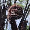 Fern curls