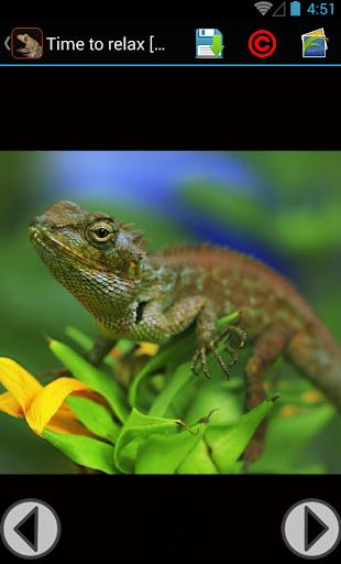 Gecko Backgrounds Wallpaper