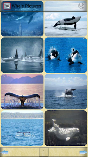 鯨魚的圖片