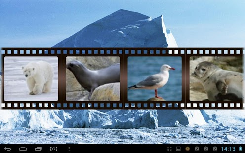 Best Arctic Animals Sounds - screenshot thumbnail