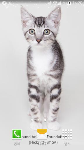 눈같이하얀고양이배경