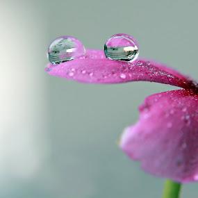 bersihkn hati untuk mencari ridho ilahi,,,, by Ribut Bagus - Nature Up Close Natural Waterdrops