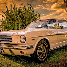 Classic Ford by Esther Visser - Transportation Automobiles (  )