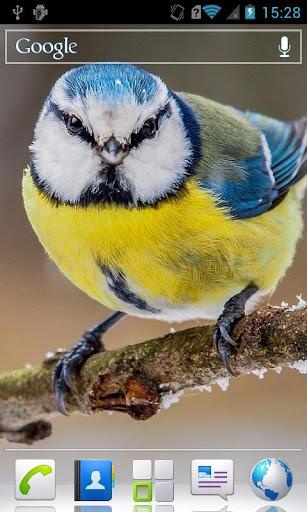 Winter birds HD Live wallpaper