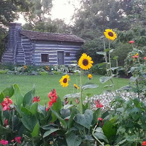Saugatuck Cabin by Sandra Fouty - Novices Only Flowers & Plants
