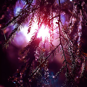 Purple by Andra Soceanu - Nature Up Close Trees & Bushes (  )