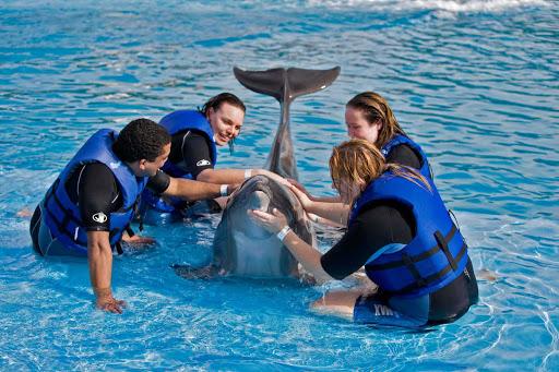 Cabo-San-Lucas-dolphin - Dolphin time in Cabo San Lucas, Mexico.