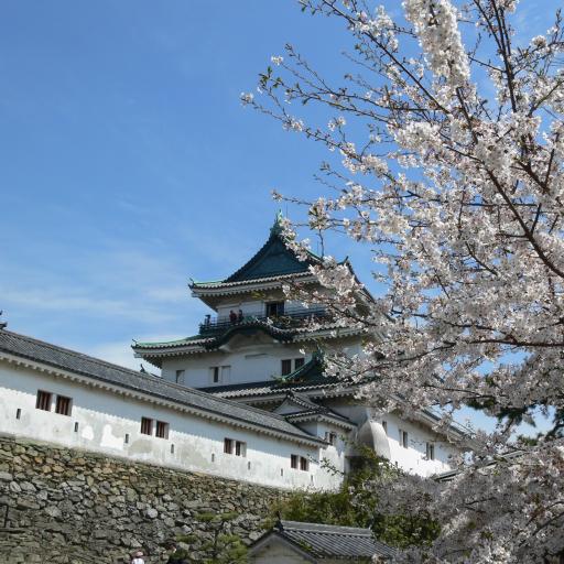 Wakayama castle(JP036)