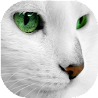 White Cats Live Wallpaper icon