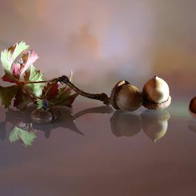 by Ilona Stefan - Artistic Objects Still Life (  )
