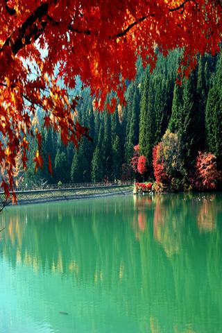 autumn in japan wallpapers driverlayer search engine