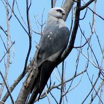 Southwestern Missouri and adjacent areas wildlife