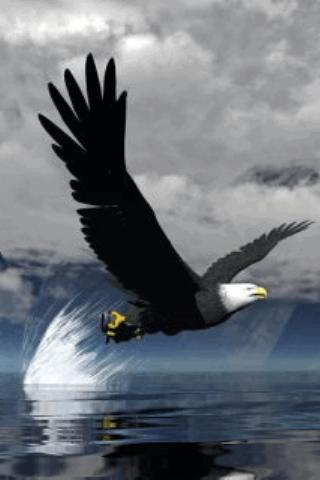 Wonderful Eagle Live Wallpaper Screenshots