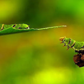 try to jump... by Hery Sulistianto - Animals Other ( animals, makro, , path, nature, landscape )