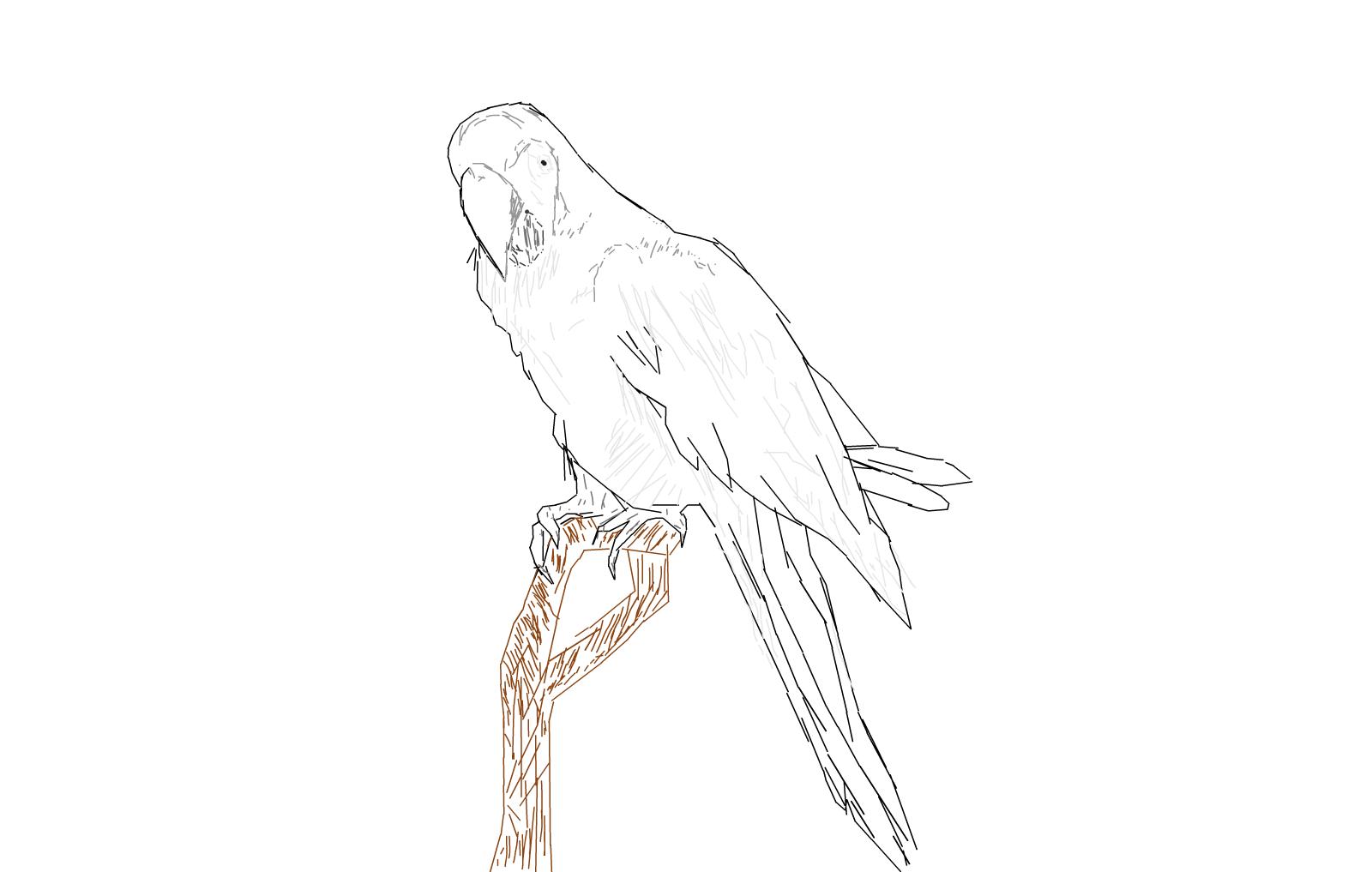 My Cute Parrot .:* » Drawings » SketchPort