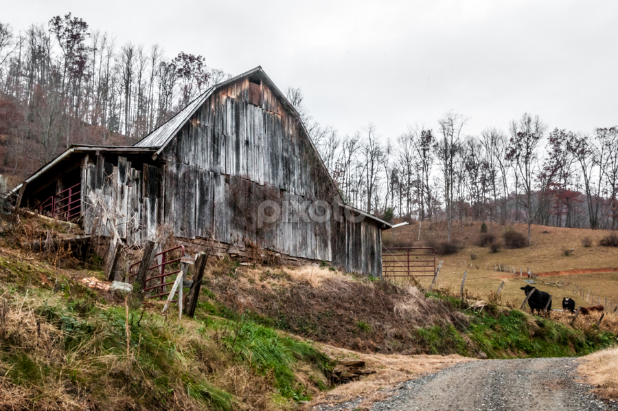 Rustic Barn Study 05 by Robert Willson - Buildings & Architecture Decaying & Abandoned ( rusty tin roof, old, rustic barn, old wood, rusty, places, tin, usa, rustic, robert willson, weathered barn, weathered, rusty tin, willson, nc, buildings, bob willson, tin roof, weathered wood, old barn, documentary, barns, rustic wood,  )