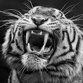 by Charliemagne Unggay - Black & White Animals ( black and white, animal )