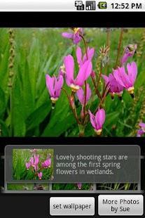 Wild Alaska Flowers screenshot