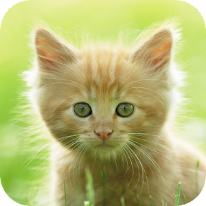 Free Apk android  Adorable Pets 1.0  free updated on