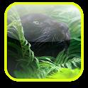 Puma Cat Video Wallpaper icon