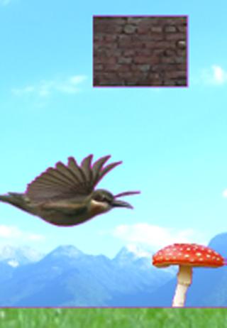 BirdCruise