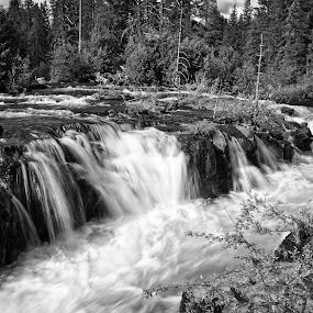 Rogue River #1 Mono by Jebark Fineartphotography - Black & White Landscapes ( oregon, waterfalls, monochrome, rogue river, waterscape, gorge, black & white, cascades, landscape, rogue river gorge, river )