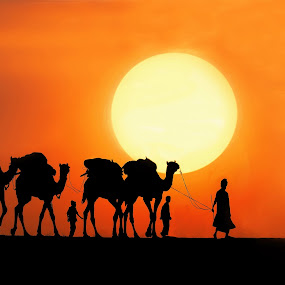 Desert transportation by Anna Tatti - Transportation Other ( silhouette, transportation desert life family camels sunset people, , colorful, mood factory, vibrant, happiness, January, moods, emotions, inspiration )