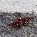 Nike moth