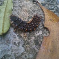 Malaysian Biodiversity