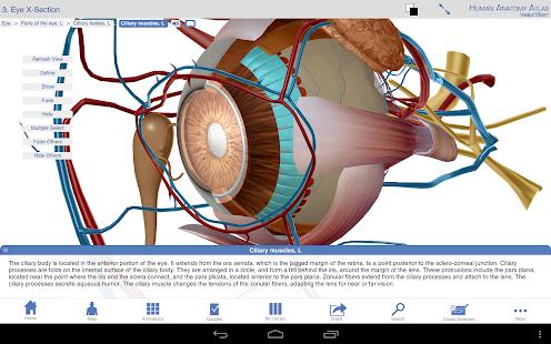 Human Anatomy Atlas SP - screenshot thumbnail