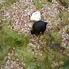 Ovo de choco (gl), huevo de sepia