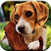 Beagle Puzzle Game