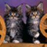 Cats And Dogs   Wallpapers icon