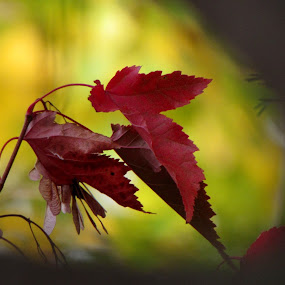 Autumn by Pamela Zeng - Nature Up Close Leaves & Grasses