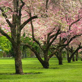 Pioneer Park by Richard Saxon - City,  Street & Park  City Parks ( walla walla, 2012 show, walgreens, pioneer park, springtime )