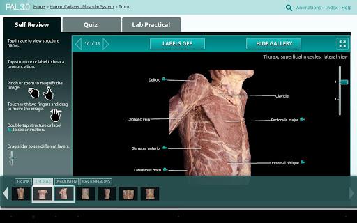 Practice Anatomy Lab PAL3